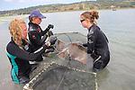 Stephanie, Melissa & Katie Working On Bat Ray