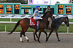 NEW ORLEANS, LA - FEBRUARY 20:<br /> In Equality #1, ridden by Junior Alvarado in the Risen Star Stakes post parade for the Louisiana Derby Preview Race Day at Fairgrounds Race Course on February 20,2016 in New Orleans, Louisiana. (Photo by Steve Dalmado/Eclipse Sportswire/Getty Images)
