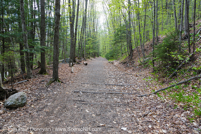 Lincoln Woods Trail in Lincoln, New Hampshire USA during the spring months. This trail utilizes the old railroad bed of the East Branch & Lincoln Logging Railroad (1893-1948). And railroad ties are still visible along the trail.