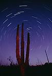 Star trails, Organ-pipe cactus, Catavina Desert, Baja California, Mexico