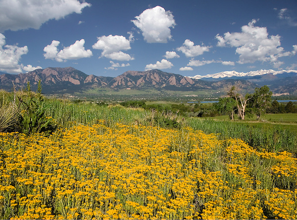 The snow-capped Indian Peaks are just a 45 minute drive. Wildflowers overlooking the Boulder valley.