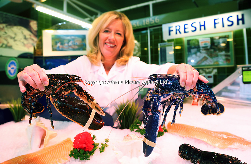 COPY BY TOM BEDFORD<br /> Annabble Denty of Coakley-Greene Fishmongers holding the rare blue lobster called Chelsea (R) and a black one believed to be one in 2,000,000 that was caught off the coast of Scotland, at Coakley Greene fishmongers in the indoor market, Swansea, Wales, UK.