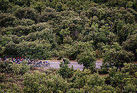 up the Col de la Faye<br /> <br /> Stage 3 from Nice to Sisteron (198km)<br /> <br /> 107th Tour de France 2020 (2.UWT)<br /> (the 'postponed edition' held in september)<br /> <br /> ©kramon
