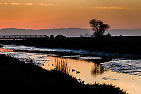 The sun went away, but its glowing light remained.  Waterfowl float in San Lorenzo Creek at sunset along the eastern shores of San Francisco Bay.