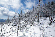 Snow covered forest blowdown patch along the Hancock Loop Trail in the White Mountains of New Hampshire during the winter months.