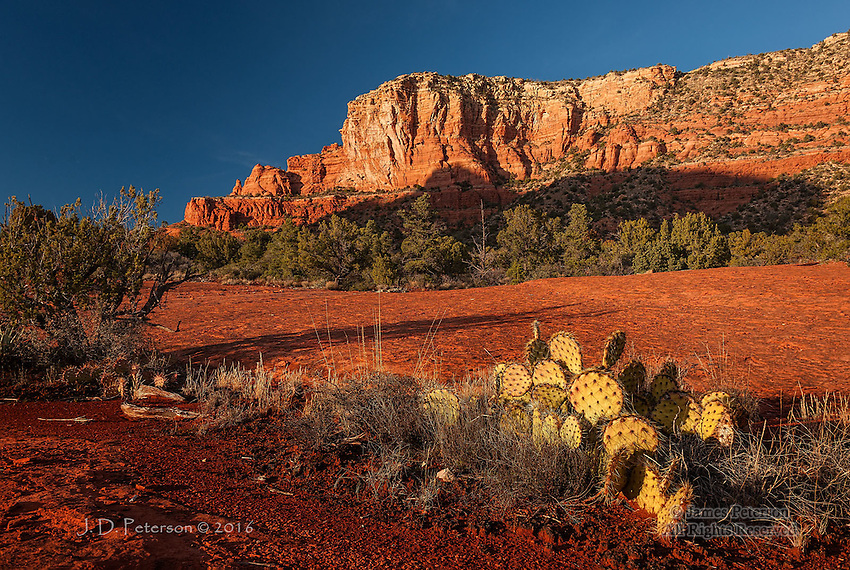 Along the Rabbit Ears Trail  © 2016 James D Peterson.  Lee Mountain and a Prickly Pear cactus bask in the warm light of the setting sun near Sedona, Arizona.