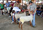 Judging at sheep show at Cheshire Fair in Swanzey, New Hampshire USA