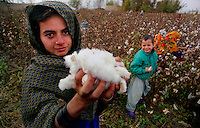 Pol-i-Kumbri / Afghanistan.Raccolta del cotone nella remota regione di Pol-i-kumbri, nord Afghanistan.Foto Livio Senigalliesi..Pol-i-Kumbri/ Afghanistan.Cotton harvest in the remote region of Pol-i-kumbri, northern Afghanistan..Photo Livio Senigalliesi