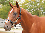 11 September 2010.  Hip #157  Distorted Humor - Hookedonthefeelin colt, consigned by Gainesway.