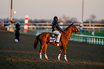 November 4, 2020: Sally's Curlin, trained by trainer Dale L. Romans, exercises in preparation for the Breeders' Cup Filly & Mare Sprint at Keeneland Racetrack in Lexington, Kentucky on November 4, 2020. Scott Serio/Eclipse Sportswire/Breeders Cup