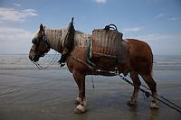 e il suo cavallo in mare durante la battuta di pesca ai gamberetti  The fisherman and his horse shrimp fishing at sea