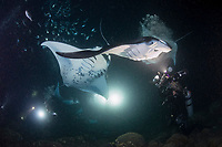 Douglas Seifert photographs reef manta rays, Manta alfredi, feeding among Hawaiian flagtail or aholehole, Kuhlia xenura ( endemic species) on plankton attracted by lights placed by divers at night, in Makako Bay, Keahole, Kona, Hawaii Island ( the Big Island ), Hawaii, USA ( Central Pacific Ocean ) MR 474
