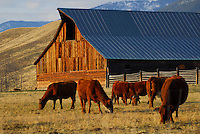 101 Ranch barn