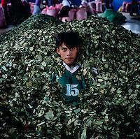 Bolivia Coca Farmers