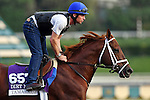 ARCADIA, CA - NOV 01: Tamarkuz, owned by Shadwell Stable and trained by Kiaran P. McLaughlin, exercises in preparation for the Breeders' Cup Las Vegas Dirt Mile at Santa Anita Park on November 1, 2016 in Arcadia, California. (Photo by Scott Serio/Eclipse Sportswire/Breeders Cup)