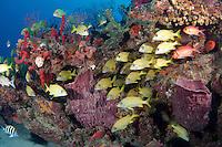 Crab Cove Reef, Deerfield Beach, Florida. Depth is sixty feet.