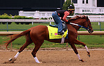 LOUISVILLE, KY - APRIL 23: Gun Runner (Candy Ride x Quiet Giant, by Giant's Causeway) exercises at Churchill Downs, Louisville KY. Owner Winchell Thoroughbreds LLC and Three Chimneys Farm, trainer Steven M. Asmussen. (Photo by Mary M. Meek/Eclipse Sportswire/Getty Images)