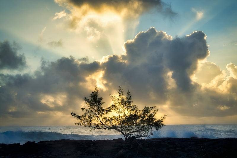 Ironwood tree and  sunrise on ocean. Puna Coast, Hawaii. The big island