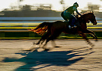January 20, 2021:Horses breeze from the gate as horses prepare for the 2021 Pegasus World Cup Invitational at Gulfstream Park in Hallandale Beach, Florida. Scott Serio/Eclipse Sportswire/CSM