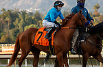 ARCADIA, CA JANUARY 3: #7 Kalypso, ridden by Joel Rosario, in the post parade of the Santa Ynez Stakes (Grade ll) on January 3, 2021 at Santa Anita Park in Arcadia, CA.(Photo by Casey Phillips/EclipseSportswire/CSM)