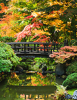 Gift card photo (set of 4) of Moon Bridge in strolling pond garden (chisen kaiyu shiki niwa) of Portland Japanese Garden with Fall colors in trees of red, yellow and orange
