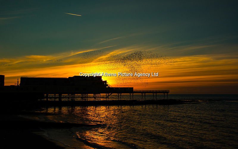 Aberystwyth, Wales, UK, Monday 15th February <br /> A flock of thousands of starlings return to their roost for the night at the old victorian pier during the sunset in Aberystwyth, Wales, UK