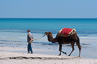 Kamelreiten, Plage de Sidi Mahres, Djerba, Tunesien