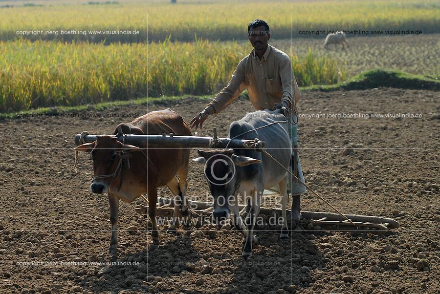 """Asien Suedasien Bangladesh , Anbau von Reis bei Bogra , Bauer pfluegen Feld mit Ochsen   -  Landwirtschaft xagndaz   .South asia Bangladesh , paddy cultivation near Bogra , farmer plough rice field with bullock - agriculture .  [ copyright (c) Joerg Boethling / agenda , Veroeffentlichung nur gegen Honorar und Belegexemplar an / publication only with royalties and copy to:  agenda PG   Rothestr. 66   Germany D-22765 Hamburg   ph. ++49 40 391 907 14   e-mail: boethling@agenda-fototext.de   www.agenda-fototext.de   Bank: Hamburger Sparkasse  BLZ 200 505 50  Kto. 1281 120 178   IBAN: DE96 2005 0550 1281 1201 78   BIC: """"HASPDEHH"""" ,  WEITERE MOTIVE ZU DIESEM THEMA SIND VORHANDEN!! MORE PICTURES ON THIS SUBJECT AVAILABLE!!  ] [#0,26,121#]"""