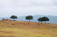 Hilltop landscape near Estremoz. Alentejo, Portugal.