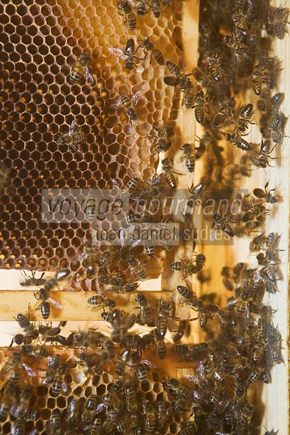 Europe/France/Provence-Alpes-Côtes d'Azur/06/Alpes-Maritimes/Alpes-Maritimes/Arrière Pays Niçois/La Brigue: Détail de la ruche vivante de la Maison du Patrimoine   de La  brigue