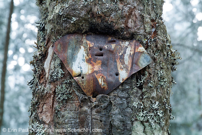 Appalachian Trail - An old Appalachian Trail marker (metal) attached to a tree along Garfield Ridge Trail in the White Mountains, New Hampshire USA