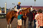 AUG 8,2014:Master the Blues,ridden by Kent Desormeaux,wins the Daisycutter Handicap at Del Mar in Del Mar,CA. Kazushi Ishida/ESW/CSM