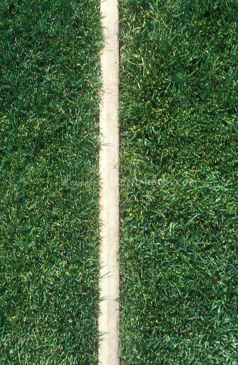 Perennial ryegrass 'Accolade' (left) compared side by side to Tall Fescue Grass 'Aztec' pasture lawn grasses closeup