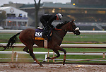 October 28, 2015:  Salama, trained by Charles Lopresti, and owned by Maria Santa Inc., is entered in the Breeder's Cup Longines Distaff Grade 1 $2,000,000.  Candice Chavez/ESW/CSM