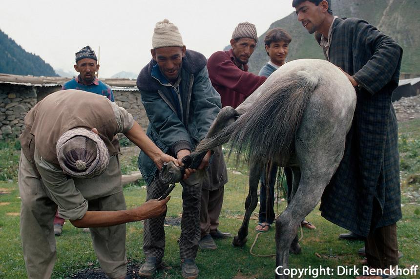 Pferd wird beschlagen, Sonamarg (Kashmir), Indien