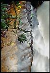Rainforest stream, Papua New Guinea
