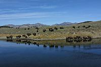 Yellowstone Ecosystem