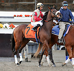 Wicked Strong (no. 7), ridden by Rajiv Maragh and trained by James Jerkens, runs in the 100th running of the grade 2 Remsen Stakes for two year olds on November 30, 2013 at Aqueduct Race Track in Ozone Park, New York.  (Bob Mayberger/Eclipse Sportswire)