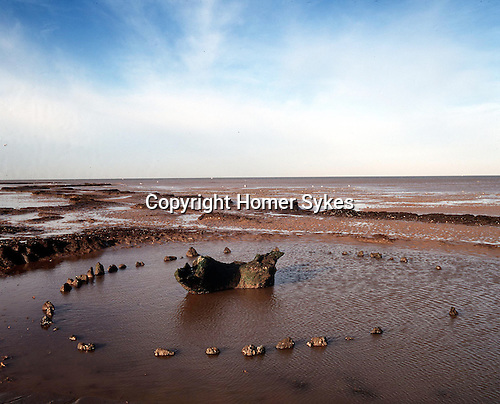 Seahenge a bronze age timber wooden circle at Holme next the sea North Norfolk England. Tree ring Prehistoric oak tree & possible altar surrounded by 54 wood posts & visible only at low .