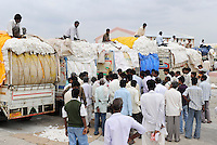 INDIA Maharashtra, cotton farming in Vidarbha region , auction at cotton market in Pandharkawada, Vidarbha has a high rate of farmer suicide due to debt crop failure of BT cotton and drought / INDIEN Maharashtra, Baumwollanbau in der Region Vidarbha , Auktion uf dem Baumwollmarkt in Pandharkawada , Region Vidarbha hat eine enorm hohe Rate von Bauernselbstmorde durch hohe Verschuldung fuer Saatgut Pestizide und Duenger , Ernteausfaelle von gentechnisch veraenderter Bt - Baumwolle durch Duerre und Wassermangel