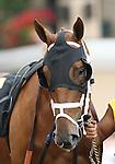 25 July 2009: E.P. Bombay (2yo by Prime Timber) at Del Mar Race Track, Del Mar, CA