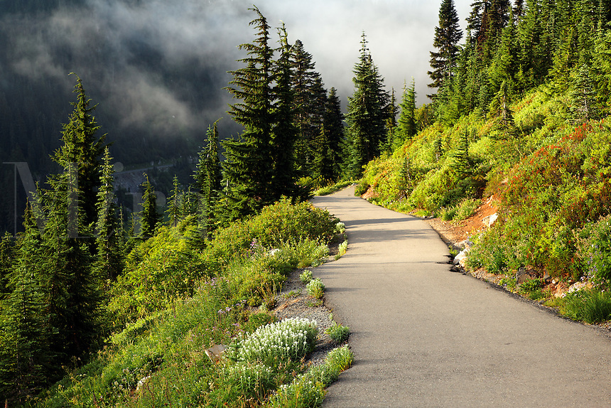 Edith Creek Trail through subalpine meadow, Paradise, Mount Rainier National Park, Washington, USA
