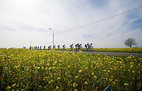 lead group through the rape (flower) fields<br /> <br /> Nokere Koerse 2014