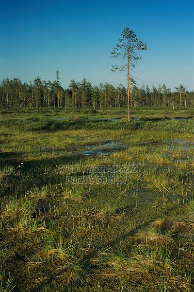 Moorland, Pyhätunturi National Park, Finland, July 2001