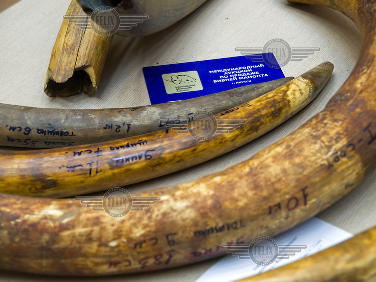 International mammoth auction in Yakutsk.