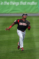 Batavia Muckdogs outfielder Yuniel Ramirez (43) catches a fly ball during a game against the Auburn Doubledays on September 7, 2015 at Falcon Park in Auburn, New York.  Auburn defeated Batavia 11-10 in ten innings.  (Mike Janes/Four Seam Images)