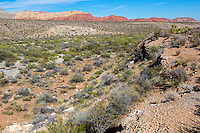 Red Rock Canyon, Nevada.  Red Rock Wash, an Arroyo, or Gully.  Calico Hills in the Background.
