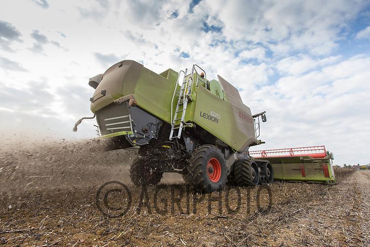 Harvesting Beans<br /> Picture Tim Scrivener 07850 303986