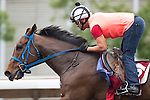 SHA TIN,HONG KONG-APRIL 23: Mongolian Saturday,trained by Ganbat Enebish,exercises in preparation for the Chairman's Sprint Prize at Sha Tin Racecourse on April 23,2016 in Sha Tin,New Territories,Hong Kong (Photo by Kaz Ishida/Eclipse Sportswire/Getty Images)