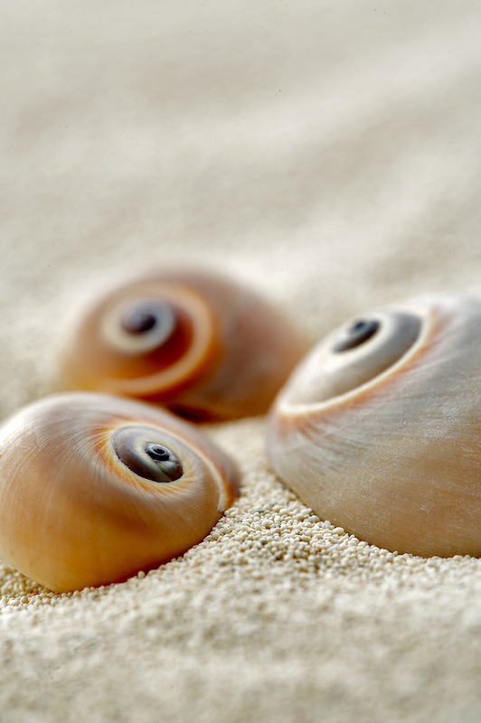 Snail seasheels and beach sand.